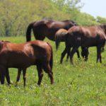 北海道産のサラブレッド由来の馬プラセンタを使用